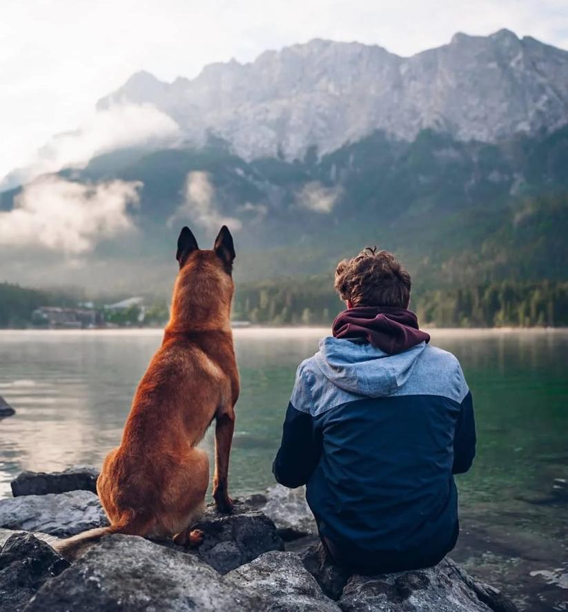 Друг и собака