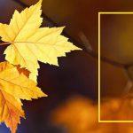 Желтый лист